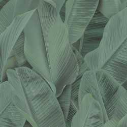 Carta da parati foglie di banano verde scuro Lymphae 17813